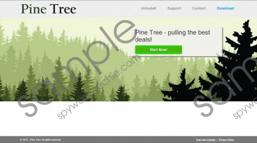 Pine Tree Removal Guide
